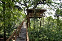 Tree House, Tranquil Resort, Kerala, South India, India, Asia