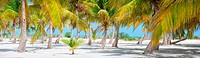 Panorama of palm trees at tropical coast in Holbox island Mexico