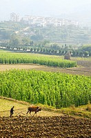 Hilltop village and farmer plowing field with ox on farmland at Yanggancun China