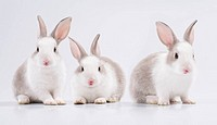 three young rabbit looking at the camera