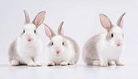 three young rabbit looking at the camera