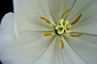 A close up to a white flower from above angle
