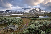 View towards Fannaraki Mountain and Fannarakbreen Glacier, mountain landscape in Jotunheimen National Park, Norway, Scandinavia, Europe