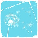card with dandelion and grunge blue background