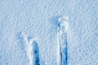 two blue skis in fresh powder snow