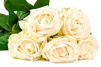 White rose bouquet isolated on white background