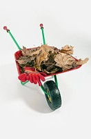 Detail view of a wheelbarrow carrying dead leaves and a pair of gloves