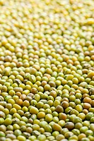 photo shot of mung beans background