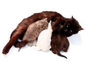 Funny little kittens with mother on white background