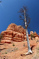 Red Canyon of the Clarion Formation, sandstone rocks in Utah, USA