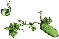 Cucumber and snails are hand drawn and live traced to achieve grunge vintage_style look.Fills and outlines are separate groups, colors can be changed ...