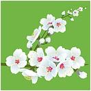 Spring blooming illustration