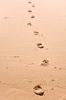 human footsteps on atlantic fine beach sand