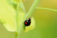 A ladybug climbing on the stem of plant