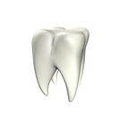 3d illustration looks clean tooth at the white background.