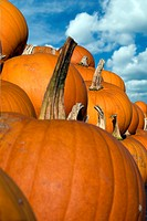 Halloween pumpkins reaching up to the sky