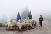 Ecuador, Cotopaxi, family with a sheep herd in the cold of the Altiplano high plateau.