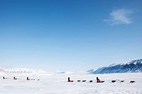 A number of dogsleds on a barren winter landscape