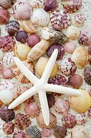 A beautiful white starfish on a colorful seashell background