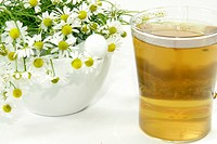 Herbal tea with fresh camomile over white background