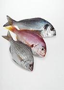 Red Sea Bream, pagellus bogaraveo, Grey Sea Bream, spondyliosoma cantharus, and Gilthead Bream, sparus auratus, Fresh Fishes against White Background
