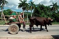 Oxen pulling a primitive cart,