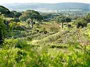 Fields in Provence