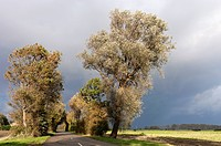 Trees, lining a rural road on a stormy autumn afternoon in Ellewoutsdijk, Zeeland
