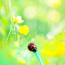 ladybird in grass