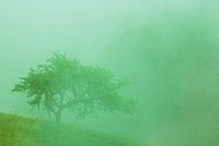 tree in the fog in the Carpthian Mountains. cross process