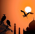 view of Taj Mahal, agra, India, birds, sun