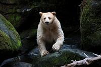 Great Bear Rainforest, British Columbia, Canada.