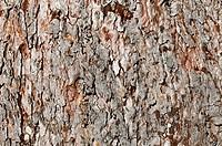 Aged Bark Background