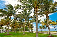palm trees, south beach area, Ocean Drive, Miami, Florida, USA