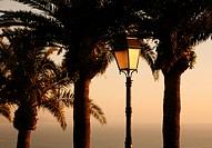 Palmen und eine Strassenlaterne in der Altstadt von Sidi Bou Said in der Daemmerung am Mittelmeer und noerdlich der Tunesischen Hauptstadt Tunis.
