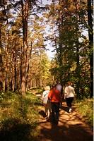 Ein Wald Park an der Ostsee bei Jurmala im westen von Riga und im Zentrum von Lettland