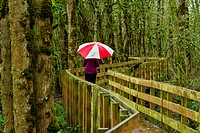 Woman with umbrella on the elevated path over forest wetland at a wildlife refuge near Salem, Oregon.
