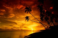 Sunset from Kapuaiwa Grove