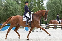 Competition dressage: Rider on a Hanoverian Horse performing an extended trot