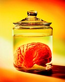 Human brain in jar