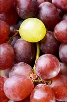 Single white grape on bunch of red grapes (thumbnail)