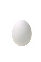 White chicken egg, includes clipping path