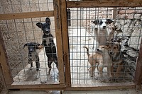 Nowzad is a kennel for street dogs in Kabul, run by louise haslie