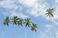 Palm trees against a beautiful clear sky
