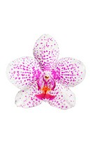 beautiful orchid flower isolated