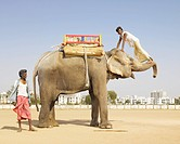 Man Doing Trick on Elephant