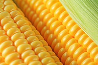 Corn, close-up