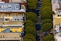 High angle view of houses and trees along a street, San Francisco, California, USA