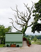 Trailer and Tree