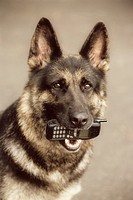 Dog Holding Cell Phone in Mouth